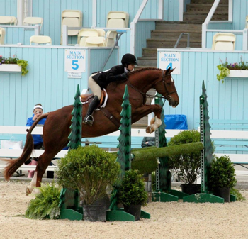 Alamo and Mariah Friedland of Alpharetta, GA competing at The Devon Horse Show