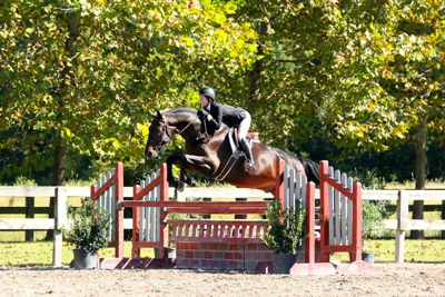 "Cartaire- Jr/Am 3'3"". For sale 1st year green hunter"